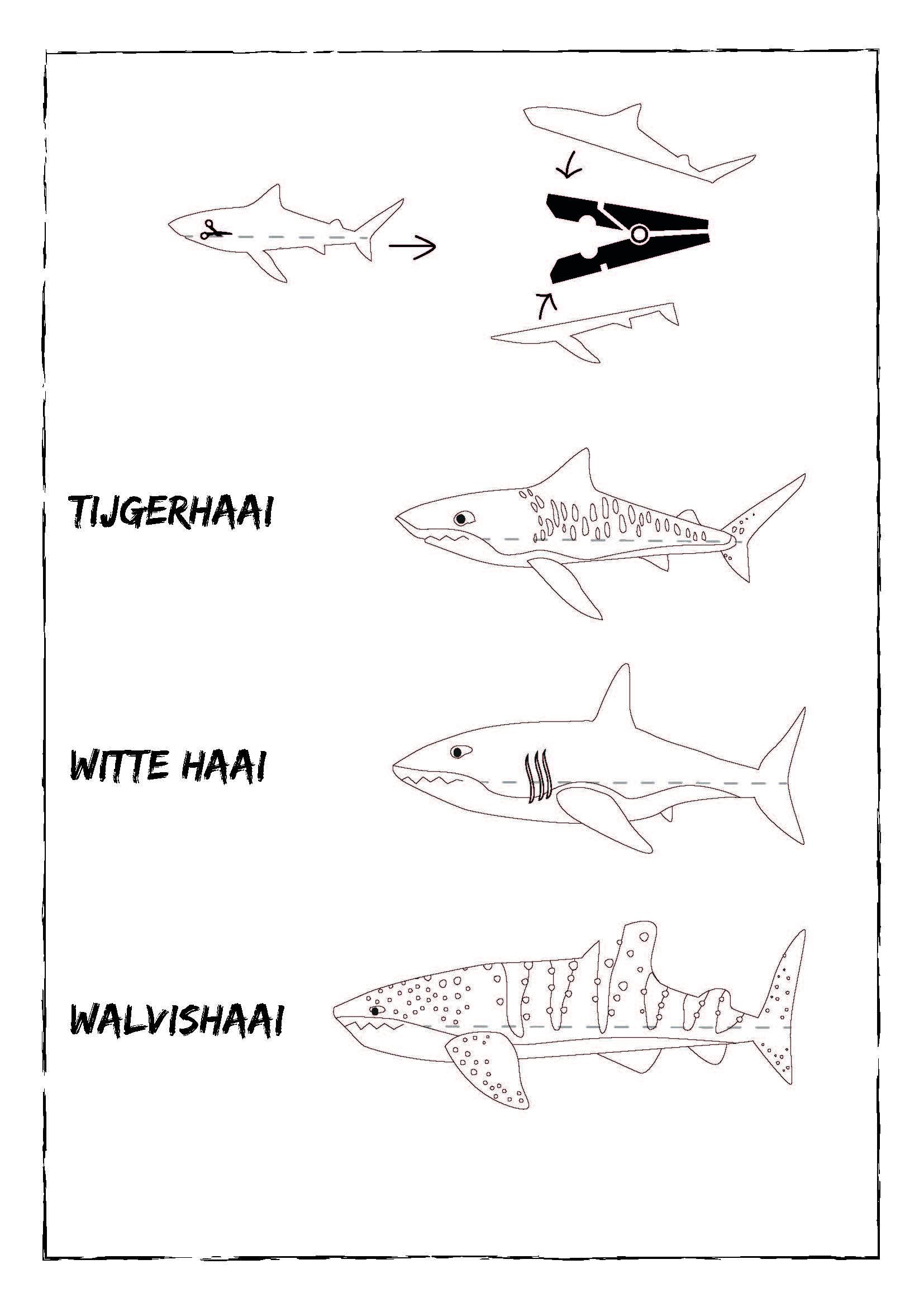 Haaienknijper